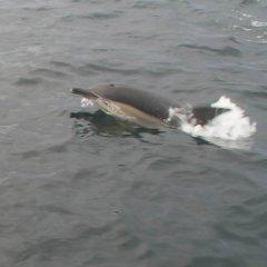 Sligo Boat Trips
