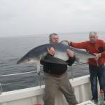 shark safari mullaghmore video picture