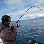 sea fishing mullaghmore