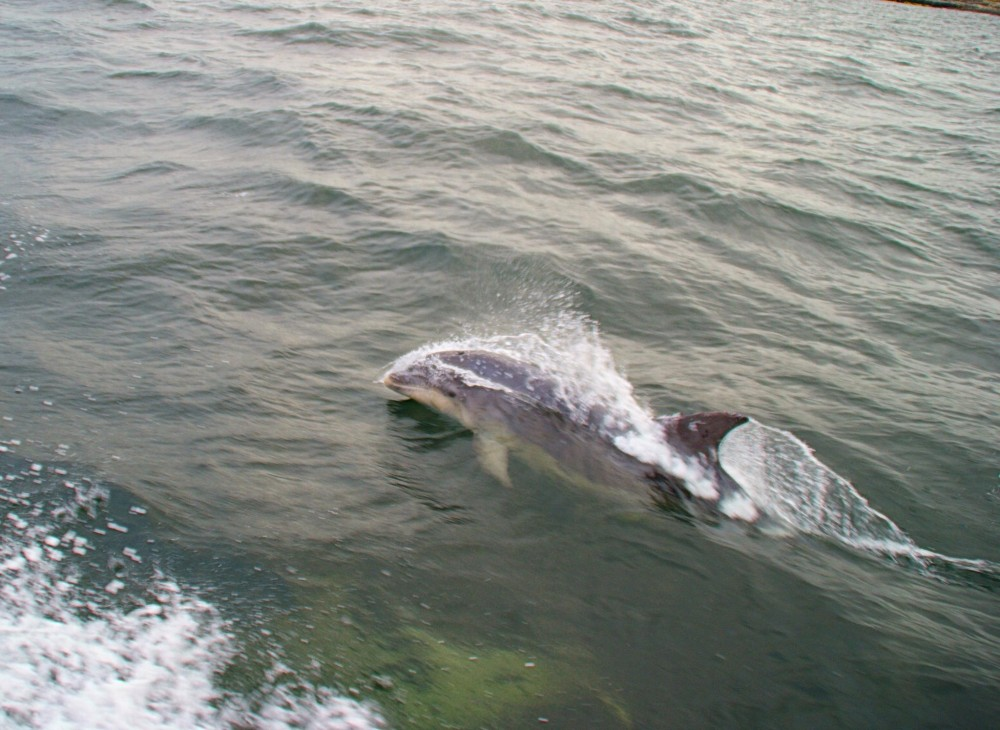 mullaghmore dolphin