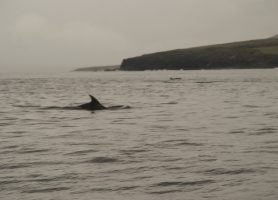 whale mullaghmore