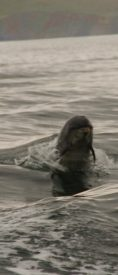 dolphin mullaghmore