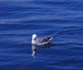 sea bird watching mullaghmore
