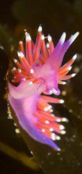 donegal scuba diving